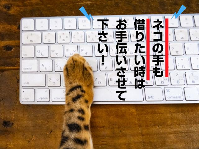 ネコの手も借りたい時はお手伝いさせて下さい!